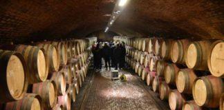 vinogradima